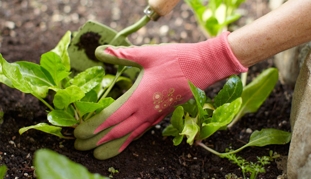 Gardening Pics gardening services london and london gardening services | london