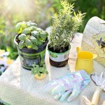 spring-clean-gardening