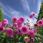 How to pollen proof your home feature image