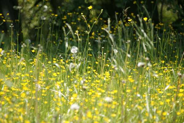 hayfever-meadow