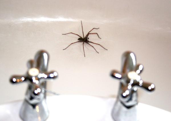 bath spider