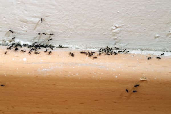 ant-feature