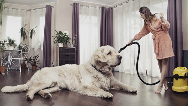 keep-house-clean-with-pets
