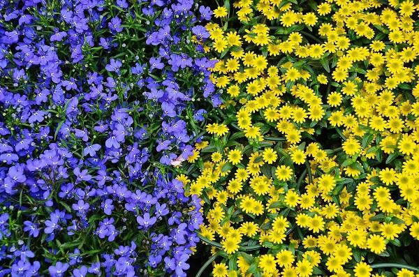 flowers-colour-scheme