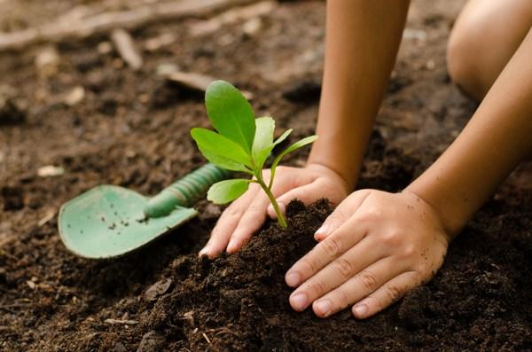 fresh-soil-planting