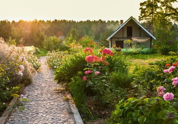 organised-garden