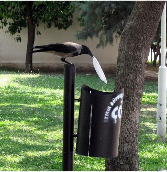 Animal cleaners - crow at park