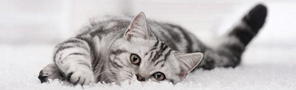 Cat sitting on white fluffy mat