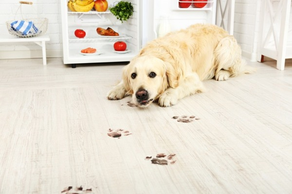 clean-paw-prints-indoors